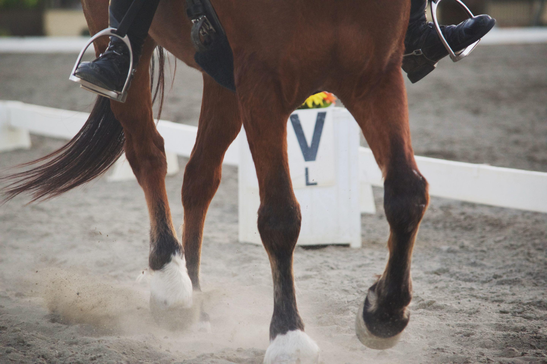 stretching du cheval