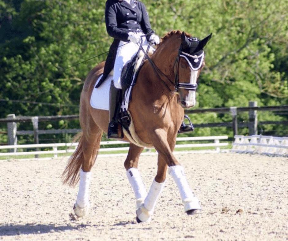 cheval dressage en place au trot allonge