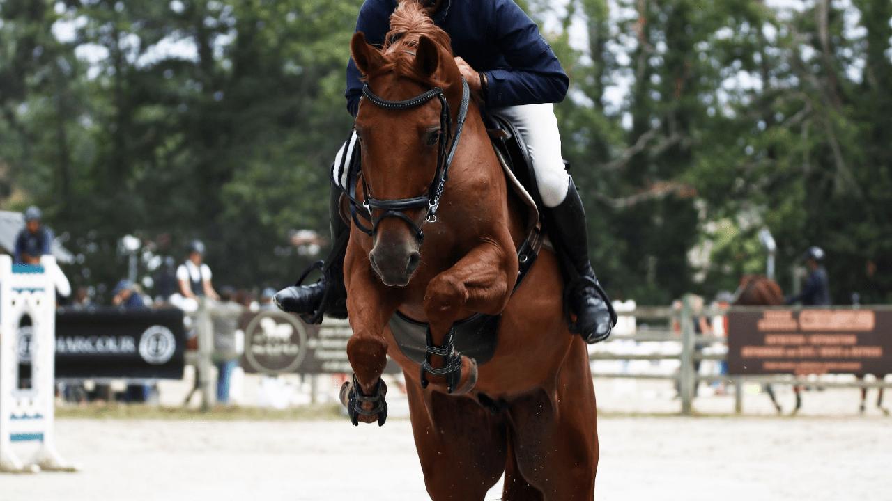 Travailler le geste du cheval a l obstacle