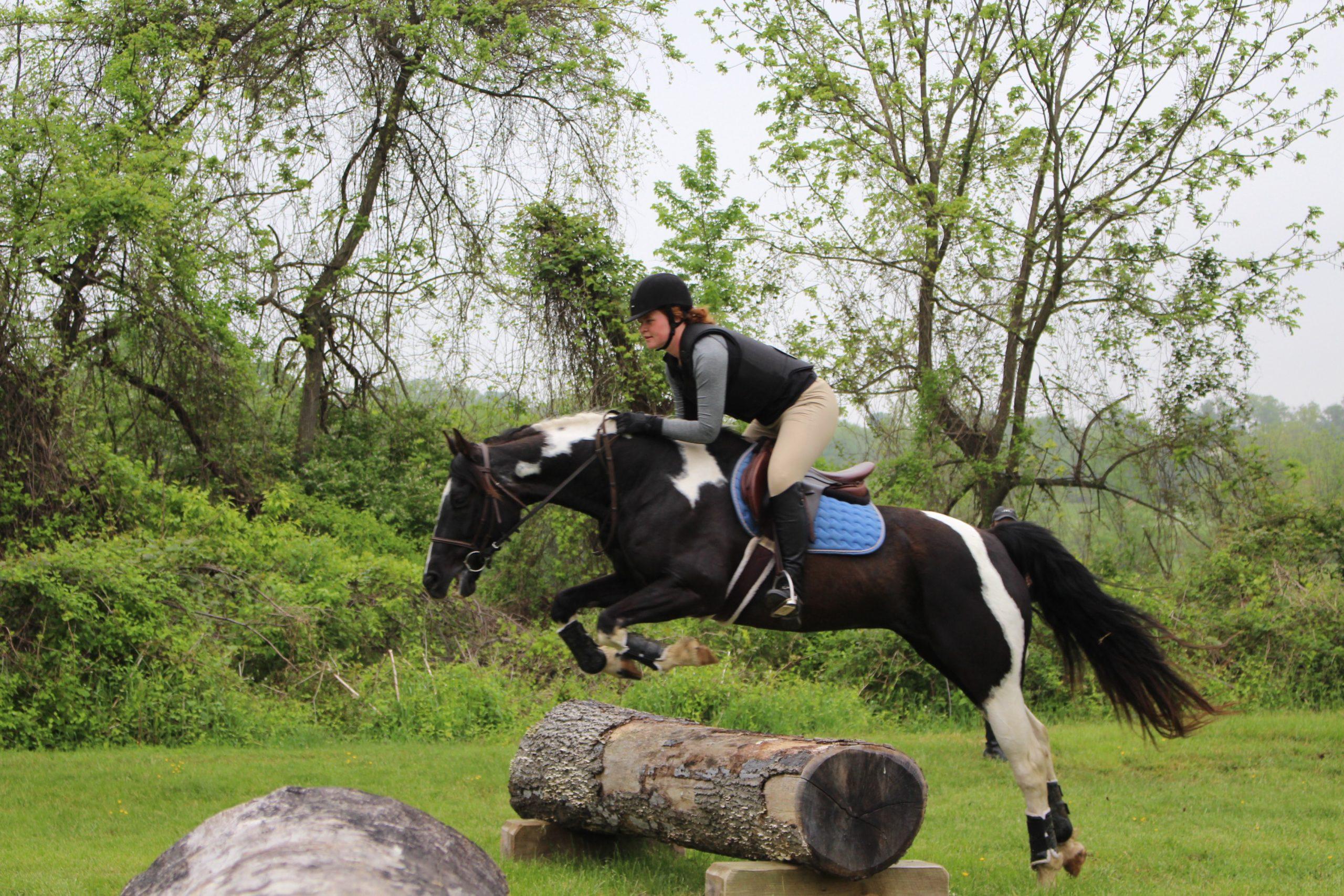 le cheval qui accélère à l'obstacle terre de sport equestre