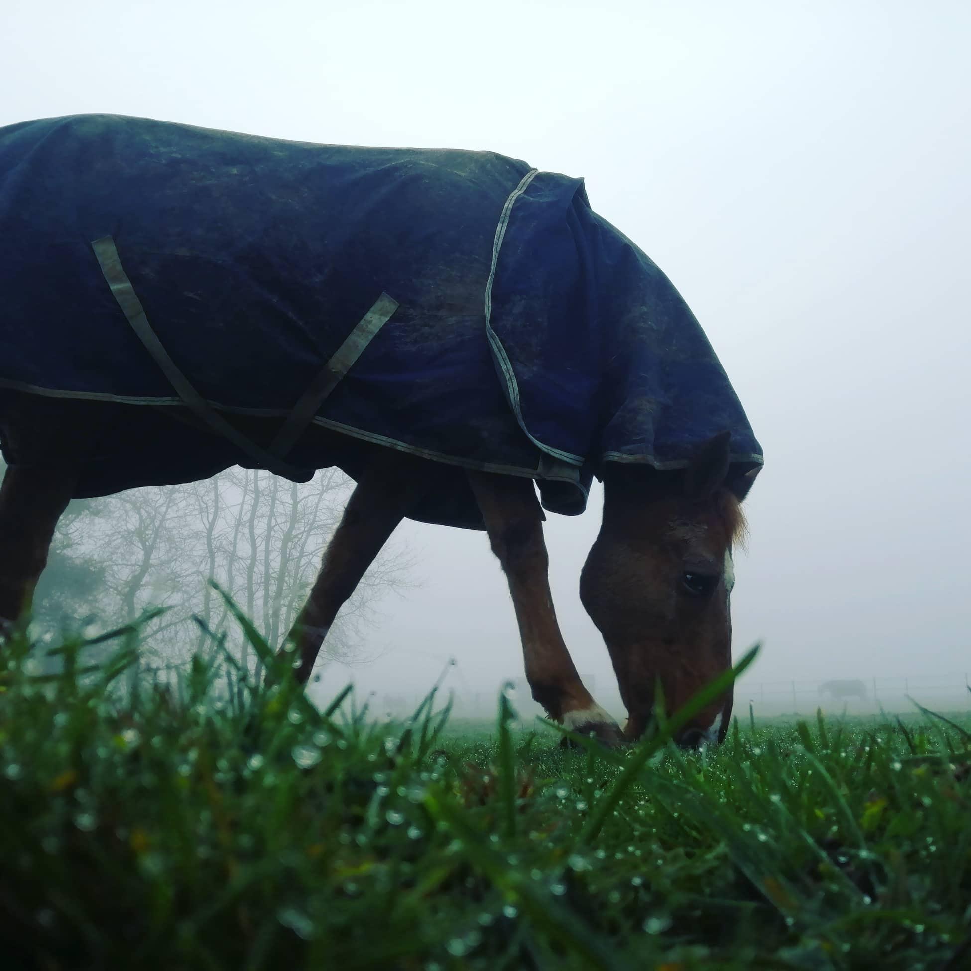 travailler son cheval en hiver