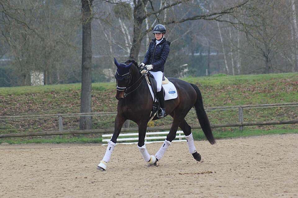 Assouplir cheval muscler le dos travailler cavalier