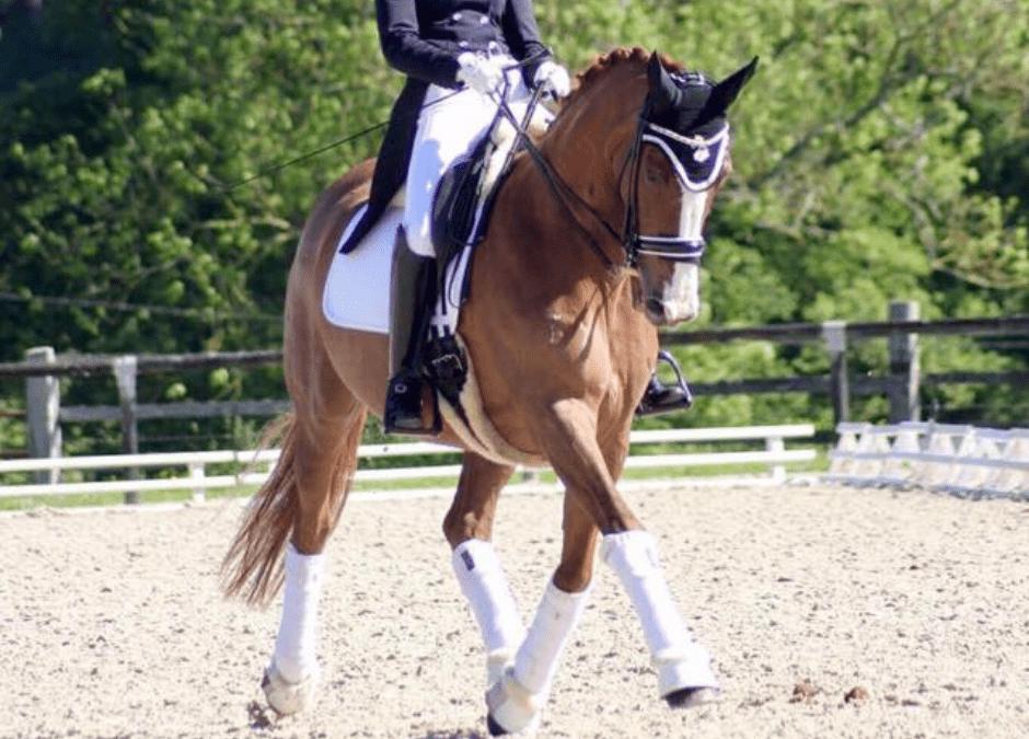 Comment mettre un cheval en place ?