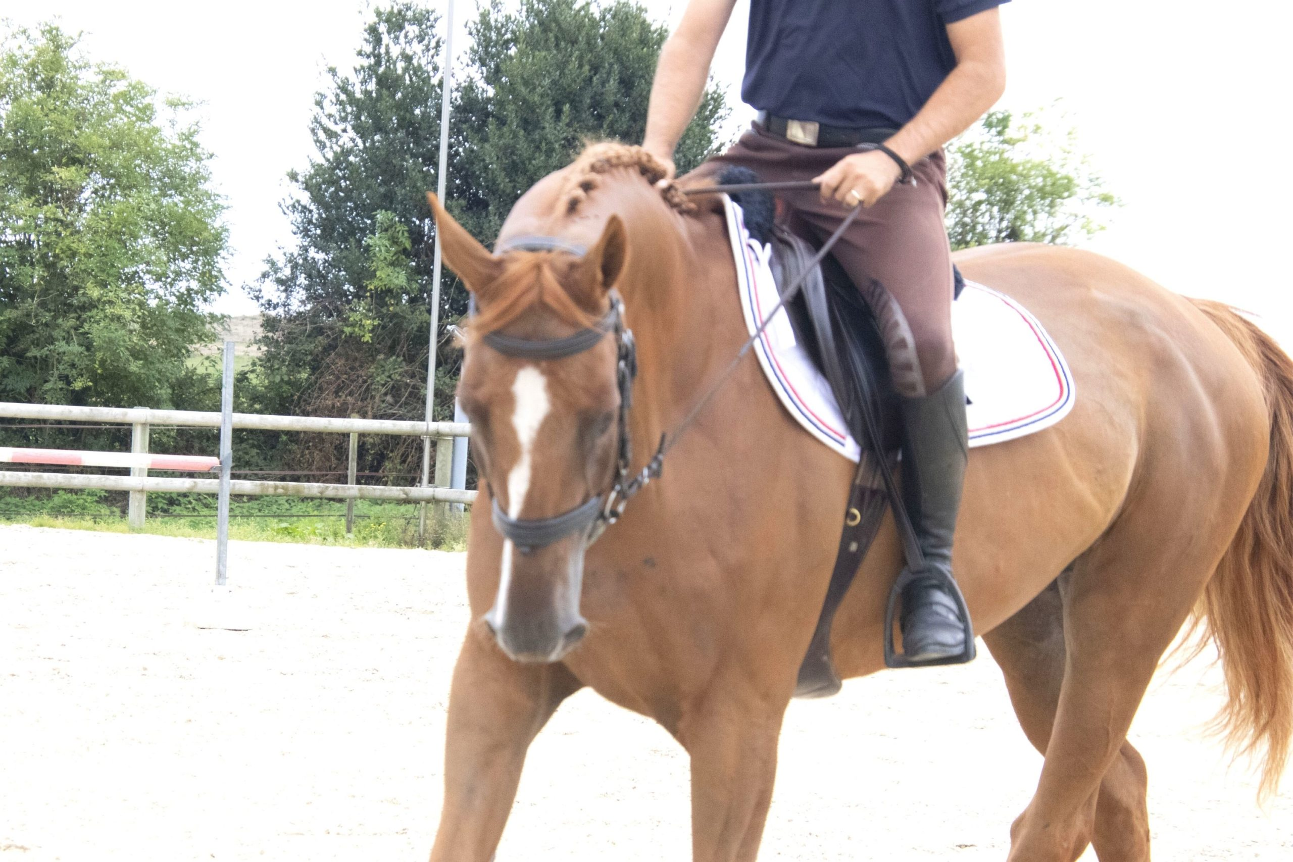 plier les coudes a cheval