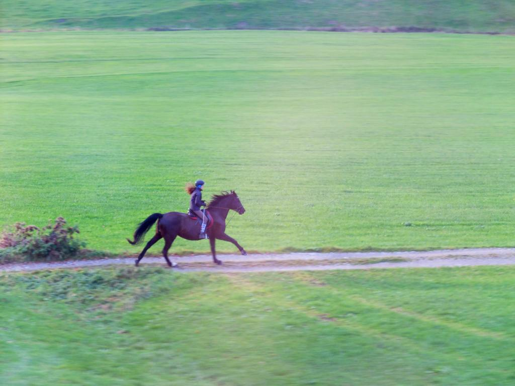 Travailler l equilibre de son cheval en exterieur