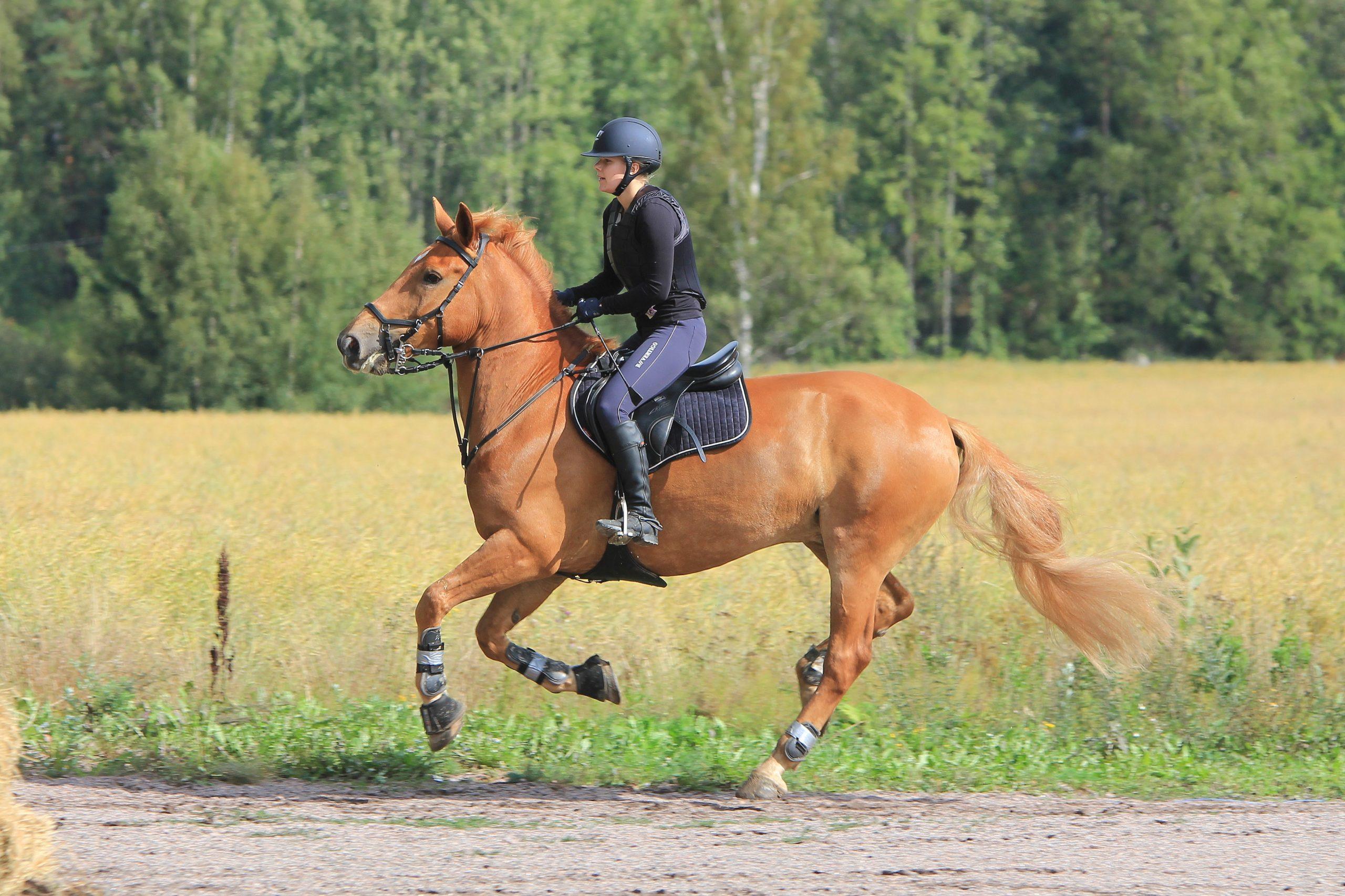 L equilibre du cheval