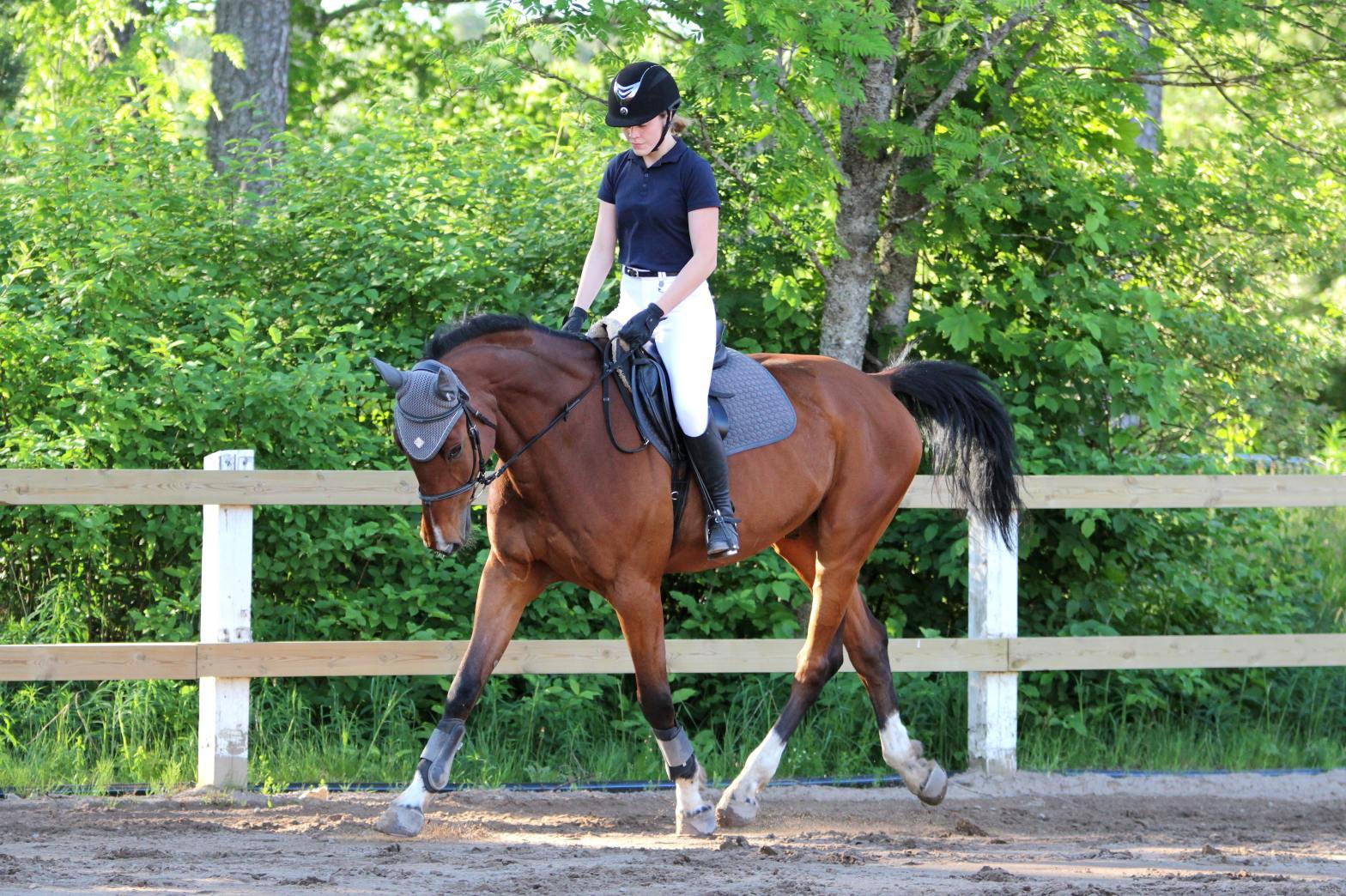 disponibilité du cheval au galop