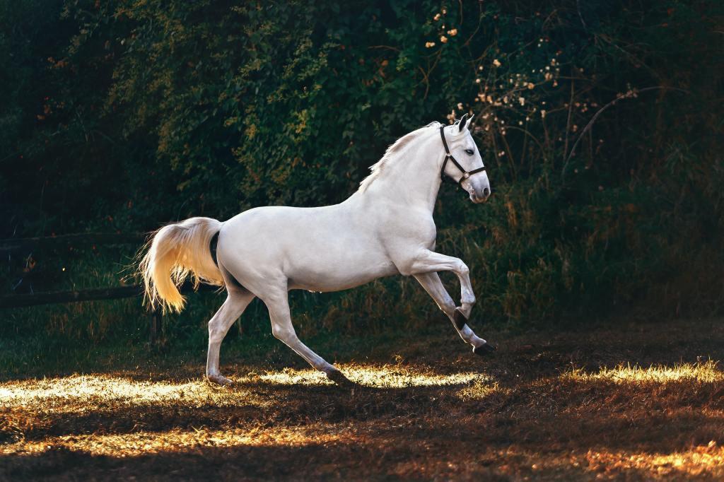 L equilibre du cheval comment l ameliorer