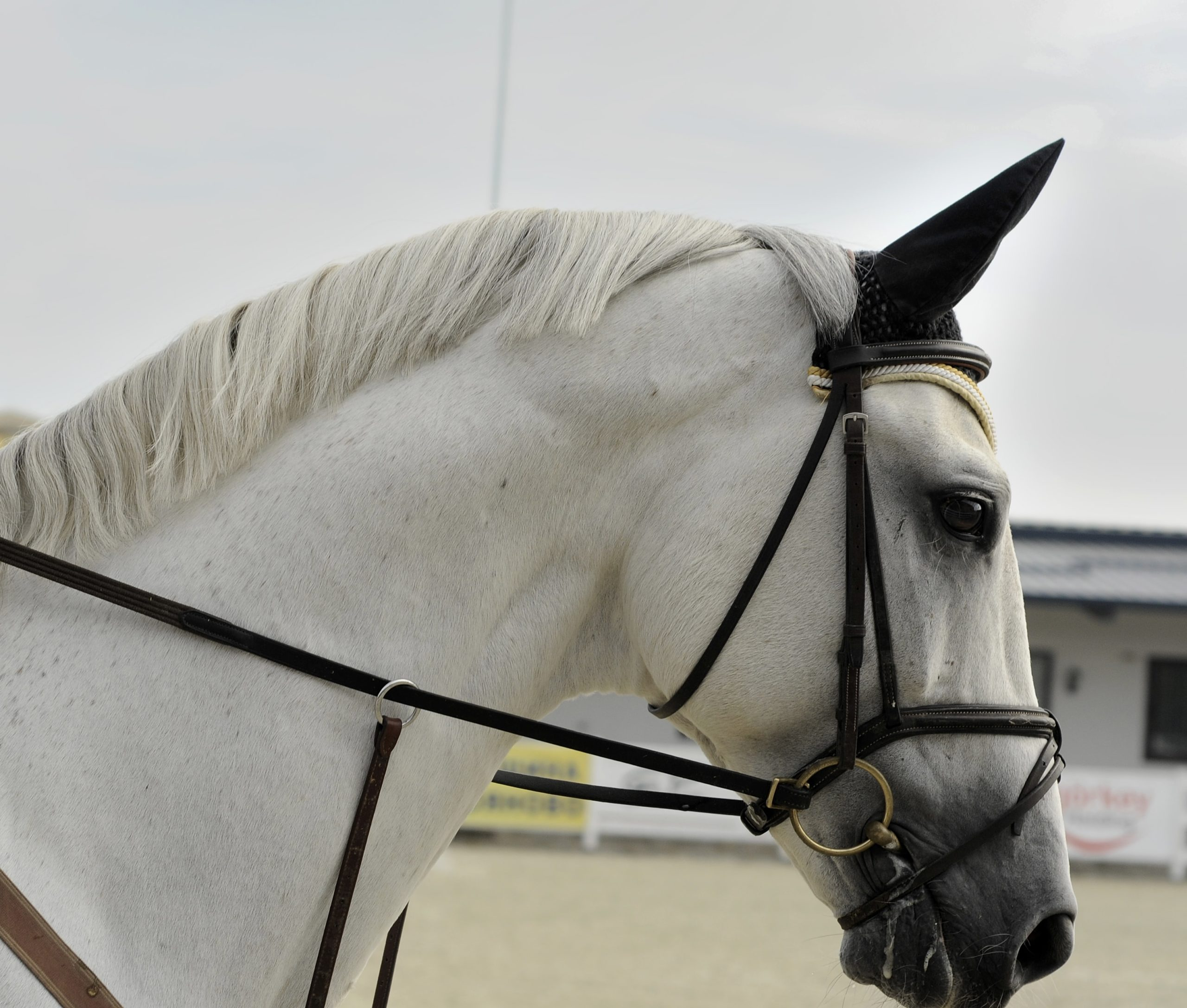 Mettre un cheval en place - Mise en main et mise sur la main du cavalier