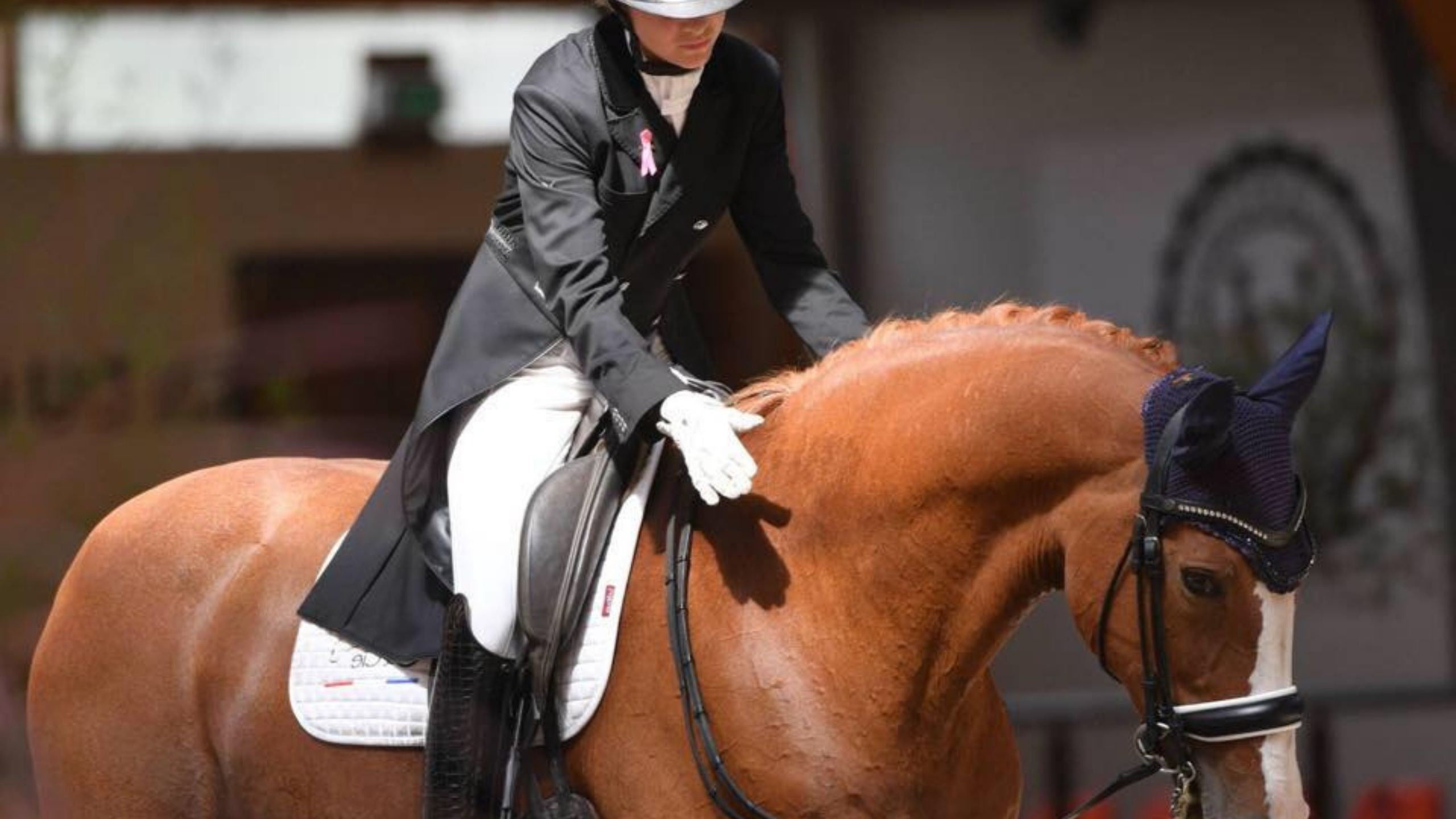 terre de sport equestre aider le cavalier et le cheval à progresser vers une equitationdans le respect et la decontraction avec des exercices en dressage et en saut d obstacles