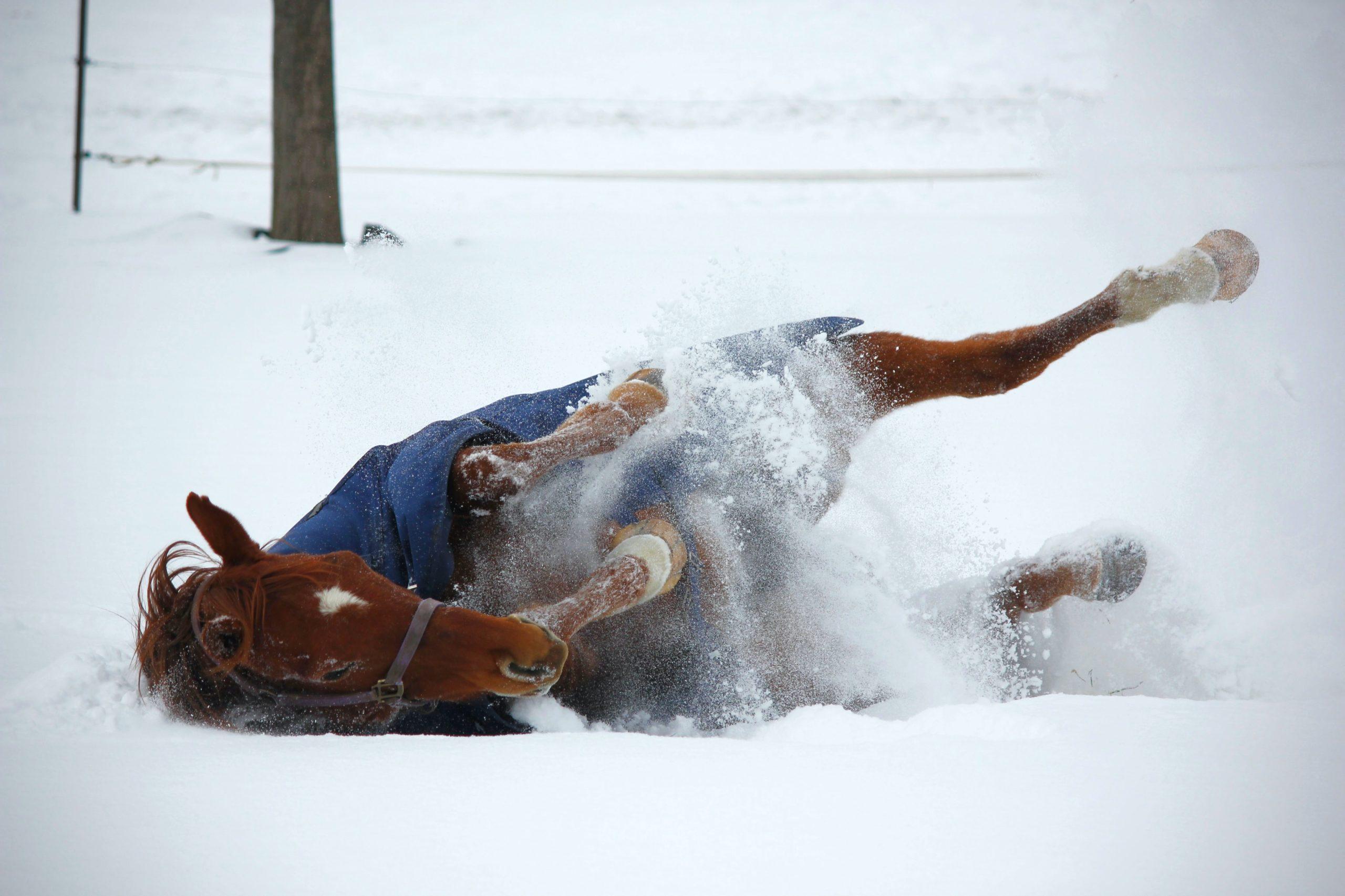 Les lignes de mecanisation cheval saut d obstacles