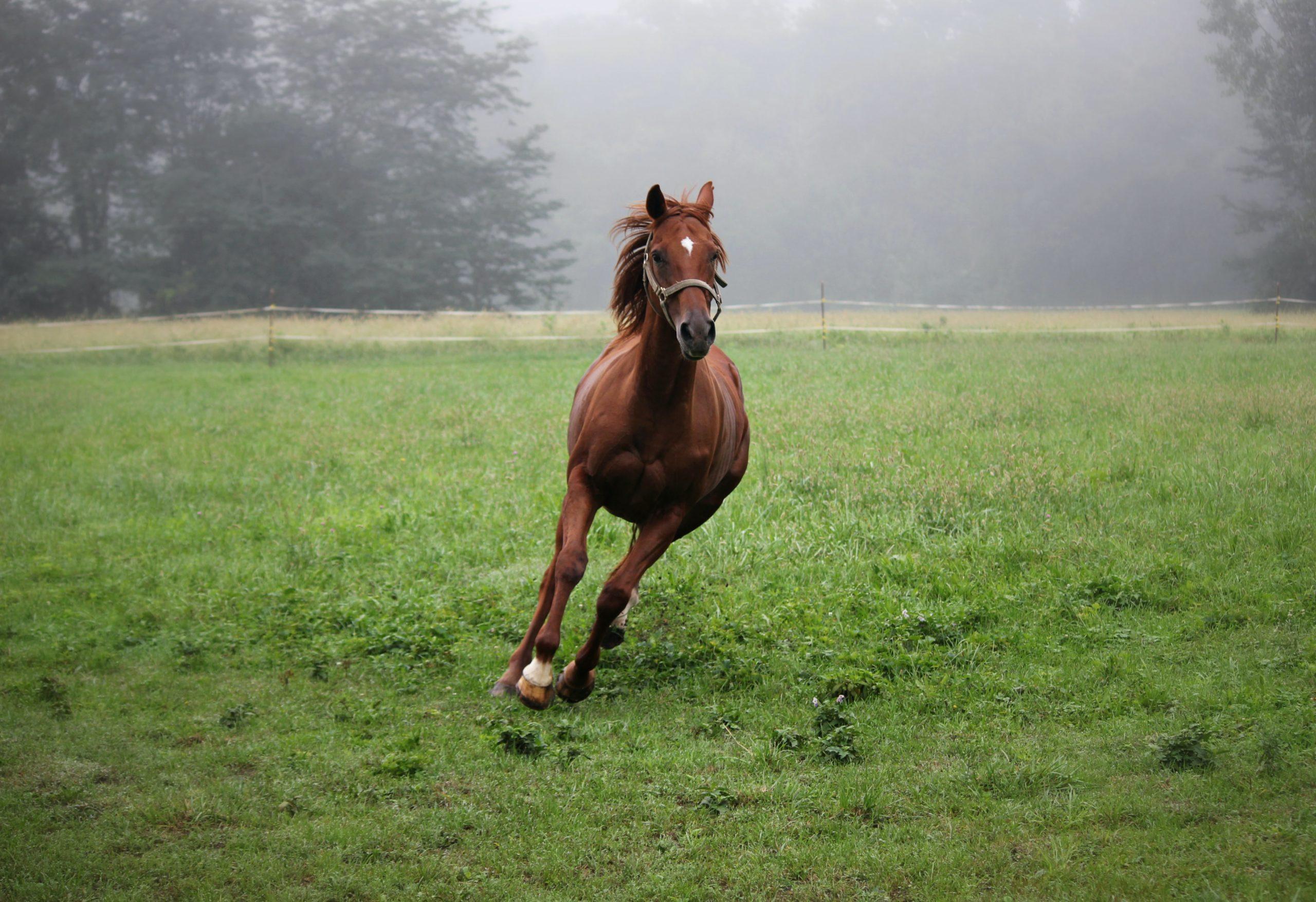 pourquoi les chevaux tournent la tete a l exterieur en liberte