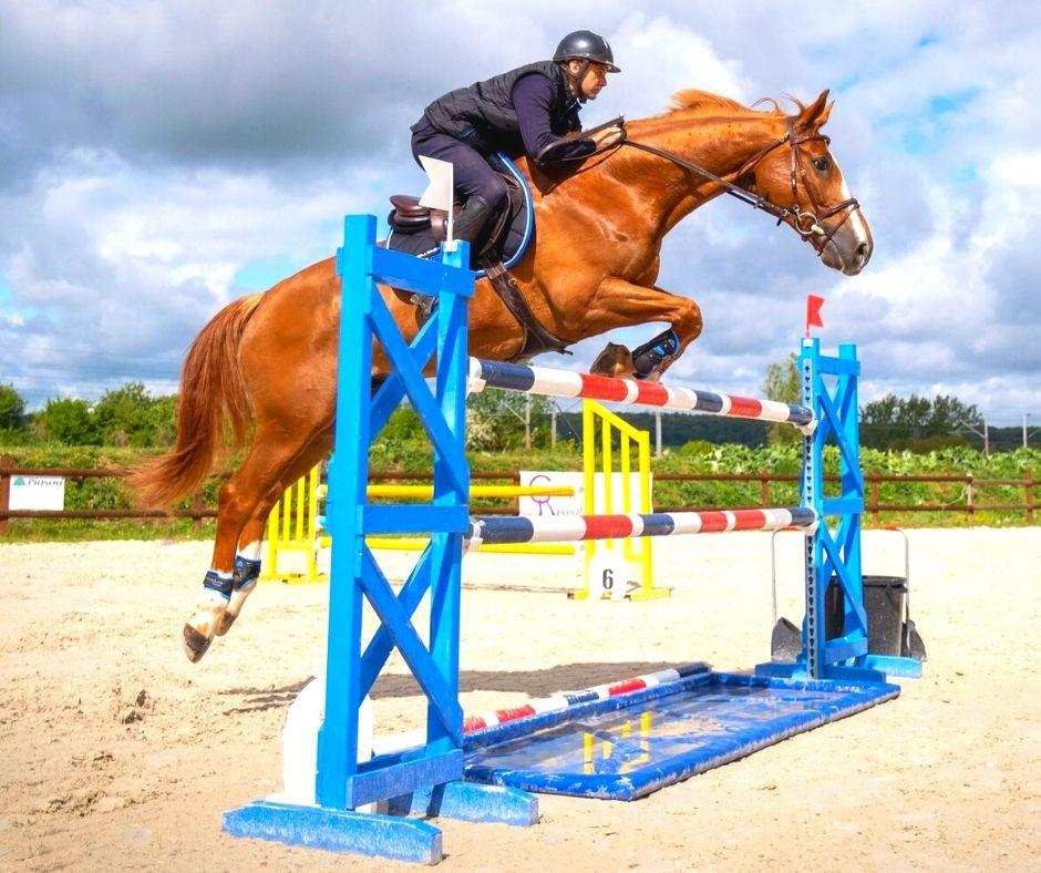 Travailler l amplitude du cheval