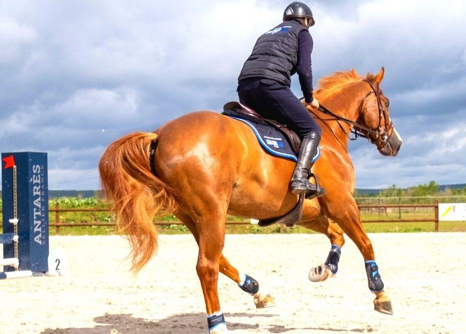 Travailler l'amplitude du cheval: un exercice indispensable !