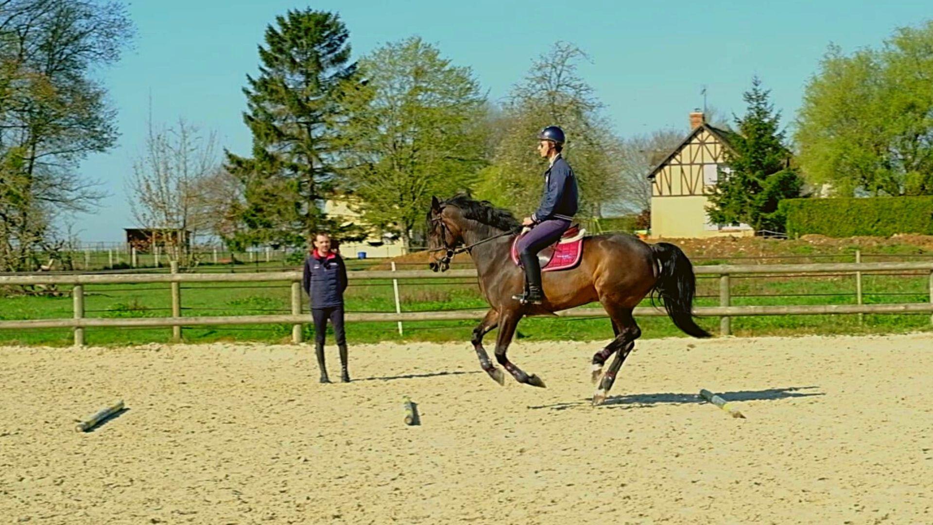 cheval equitation cavalier