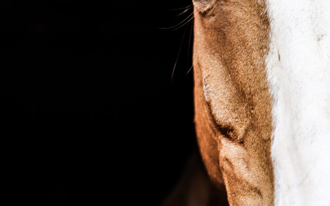 Quand tout va mal à cheval – Equitation
