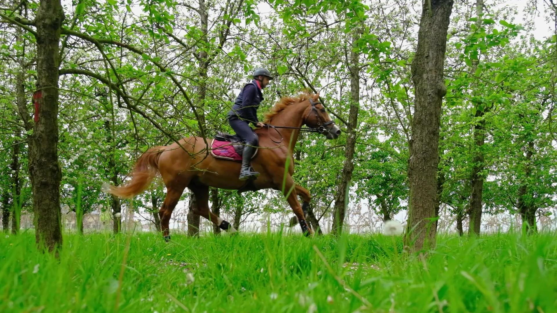 Remettre en route son cheval