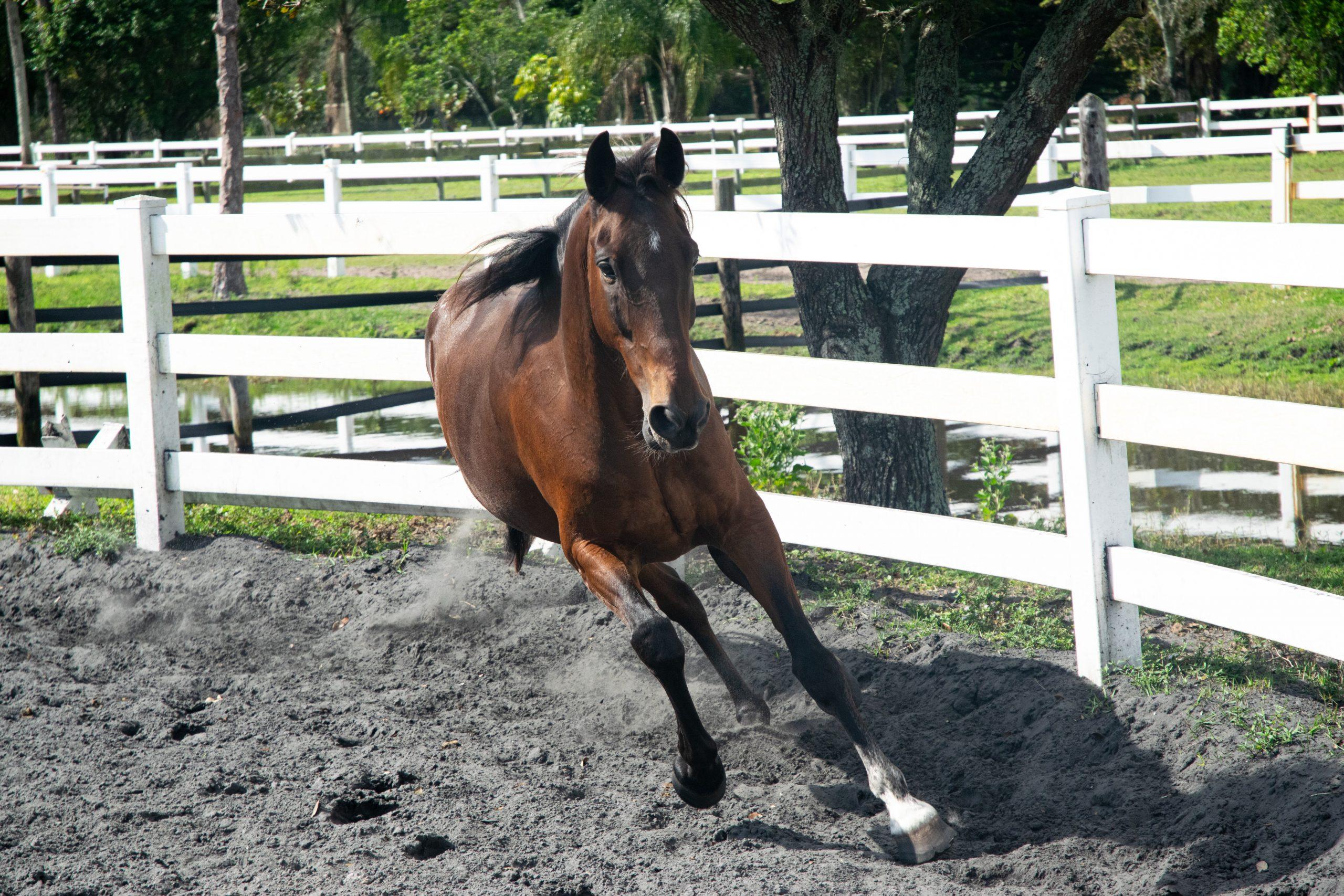 cheval qui se couche sur le cercle