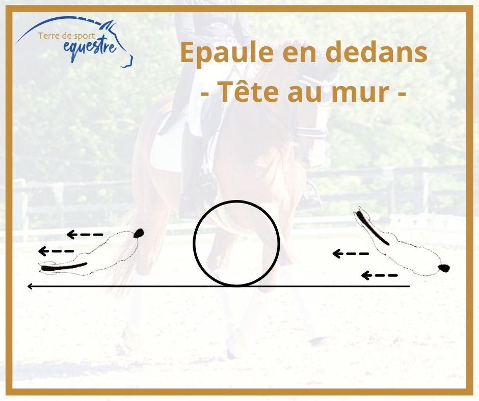 assouplissement du cheval