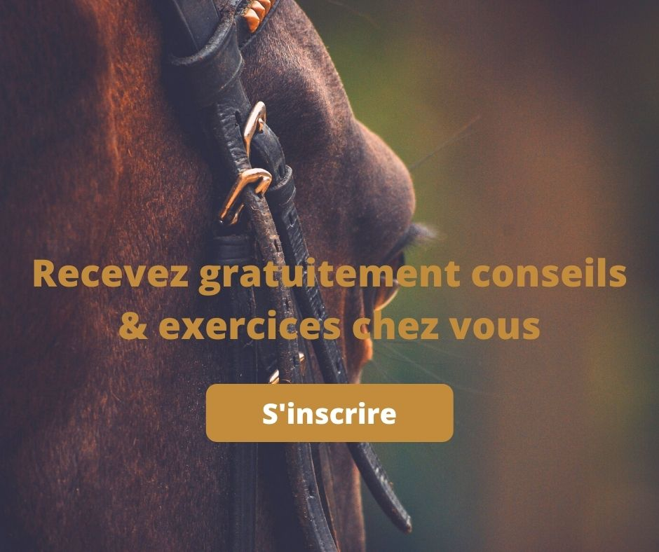 equitatin cheval