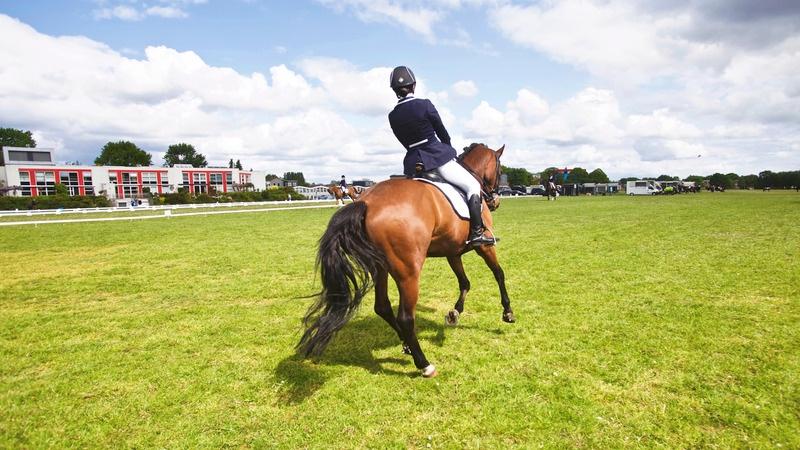3 exercices pour améliorer l'engagement des postérieurs de mon cheval