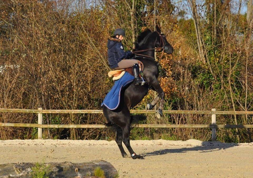 Comment gérer un cheval chaud en hiver ?